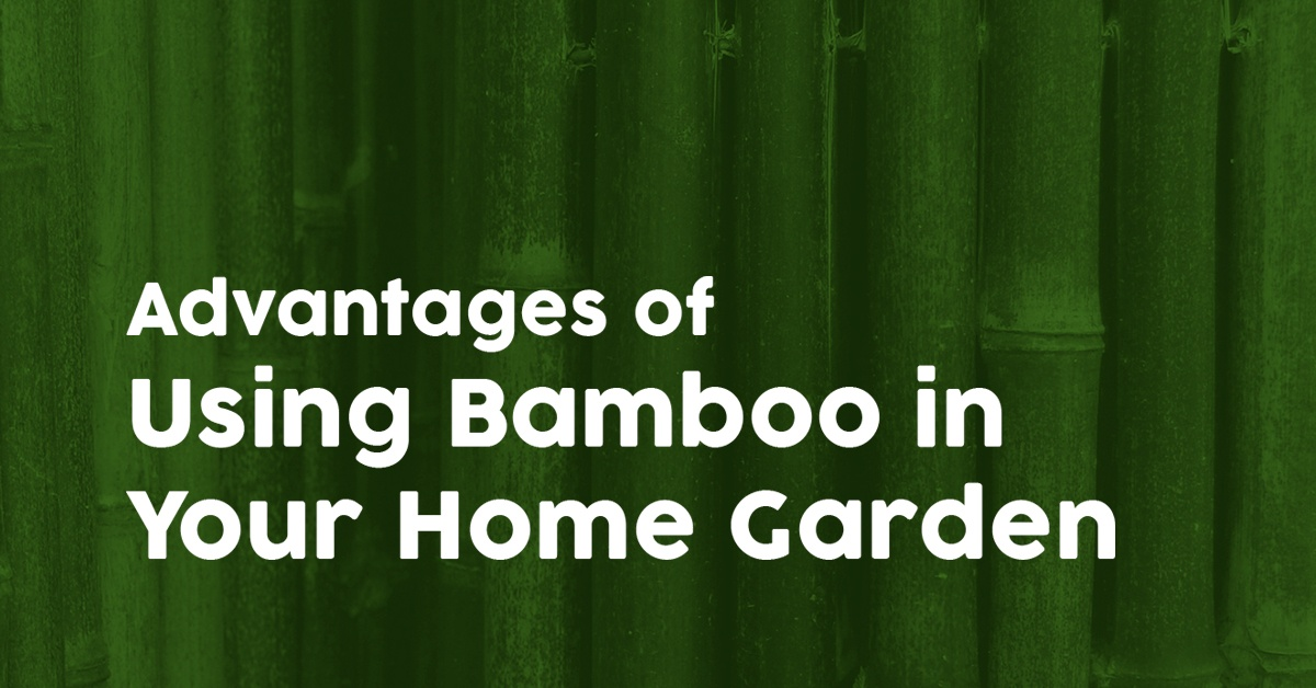 Advantages of Using Bamboo in Your Home Garden