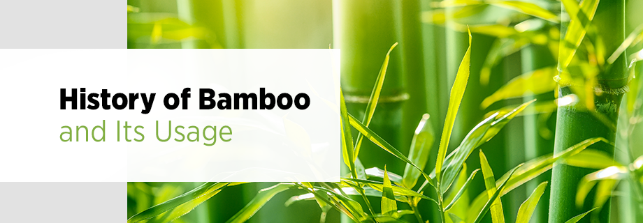 Bamboo History and Usage