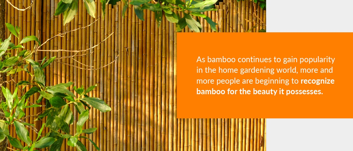 Bamboo is decorative for designing