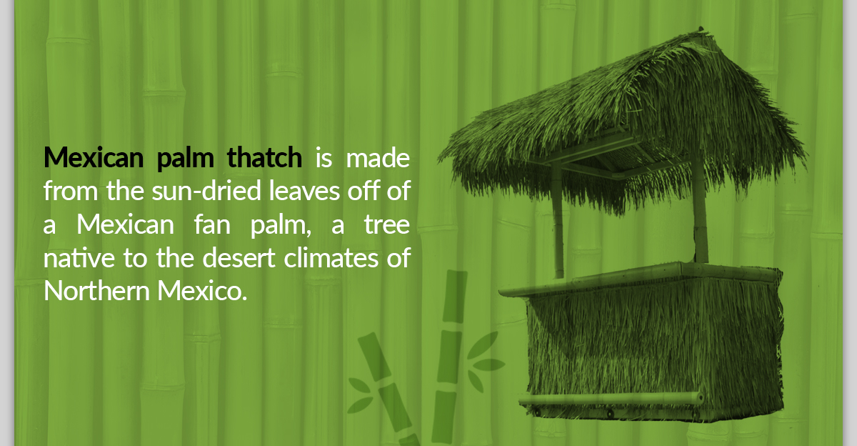 What is Mexican Palm Thatch