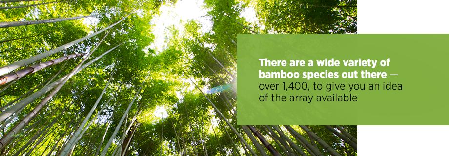 Species of Bamboo