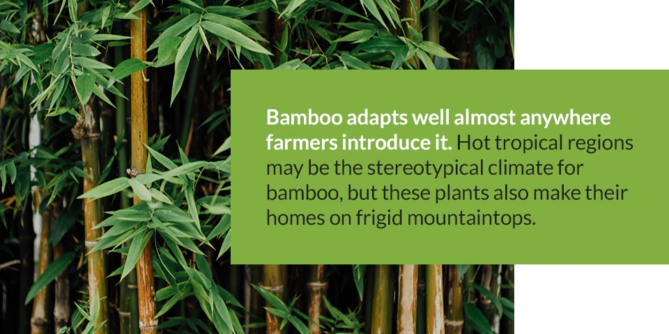 Best Environments for Growing Bamboo