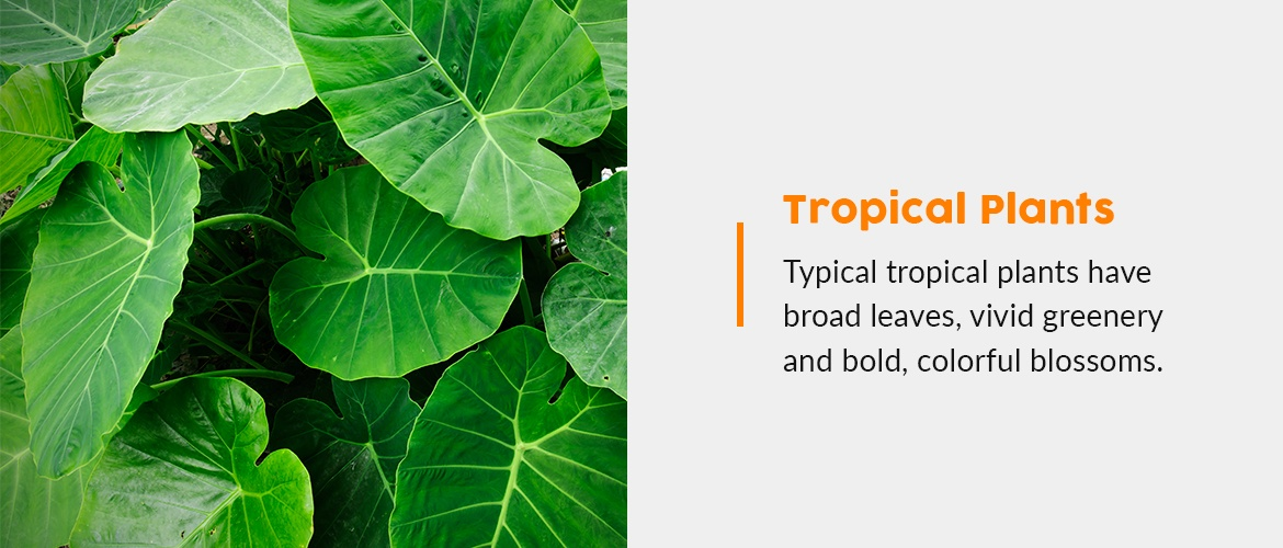 Decorate poolside with tropical plants