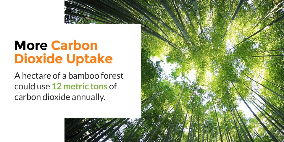 Bamboo and Carbon Dioxide