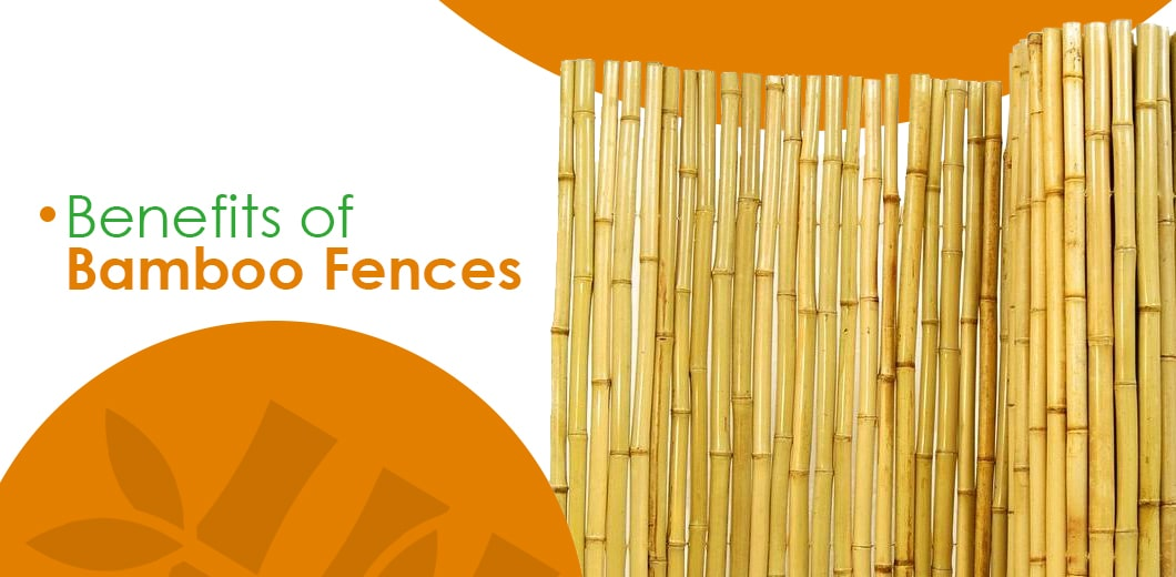 Bamboo fence benefits