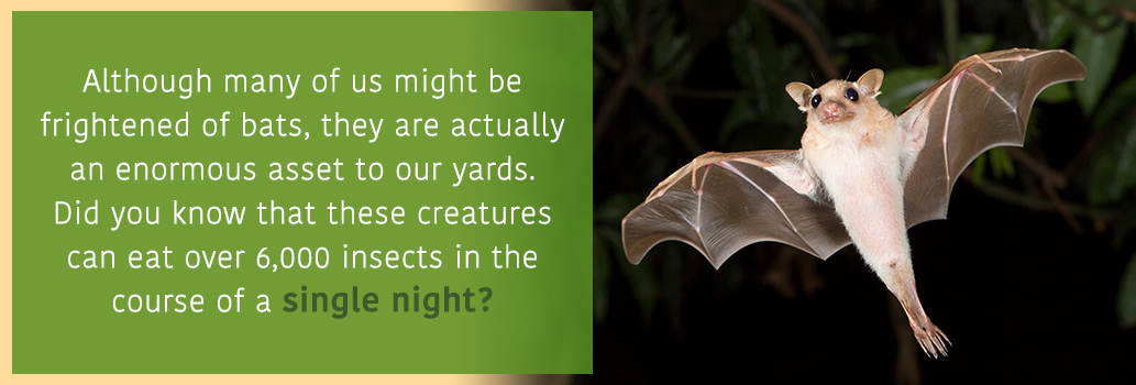 Invite Bats into your yard