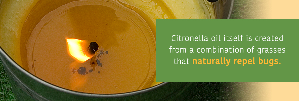 Burn some Citronella in the backyard to repel bugs