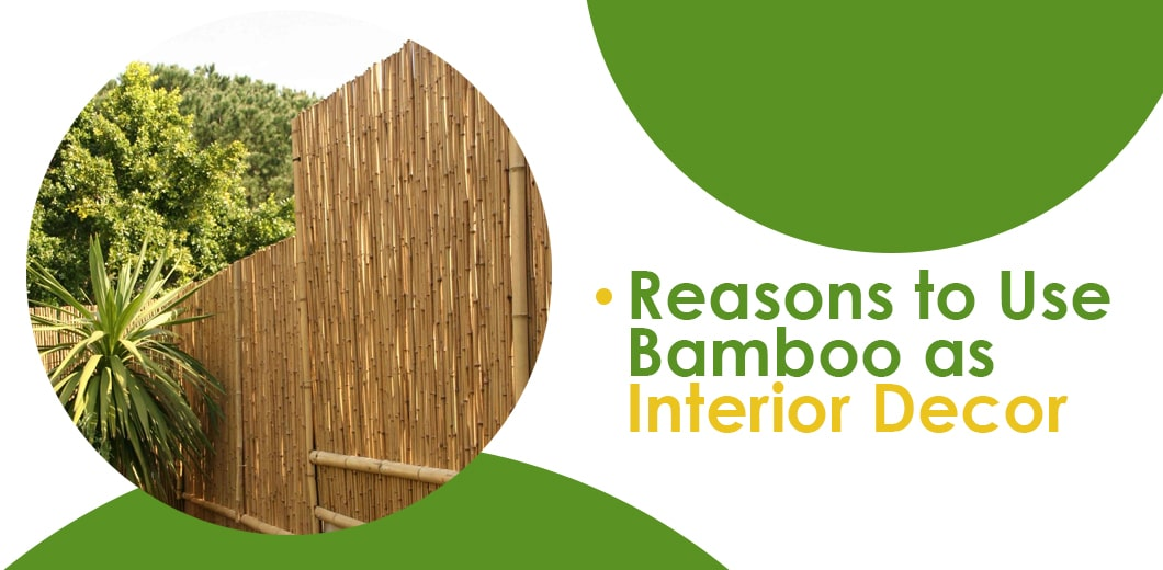 Why decorate your indoor space with bamboo